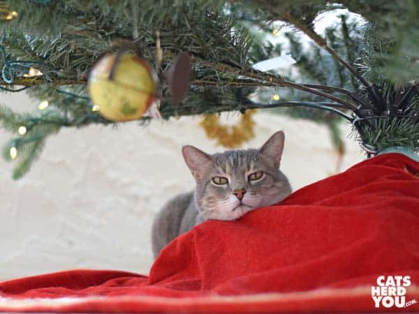 gray tabby cat under artificial Christmas tree