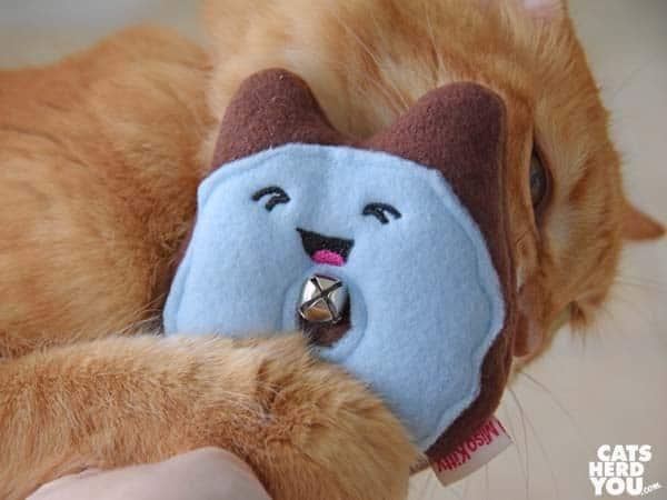 orange tabby cat and donut toy