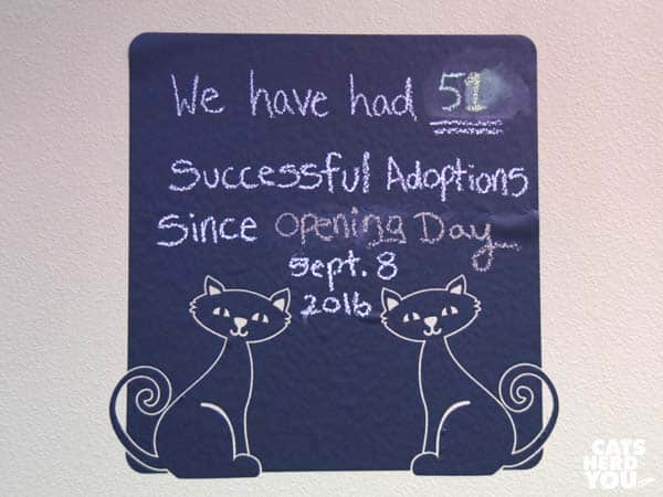 orlando cat cafe adoptions board
