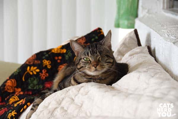 one-eyed brown tabby cat on chicken quilt