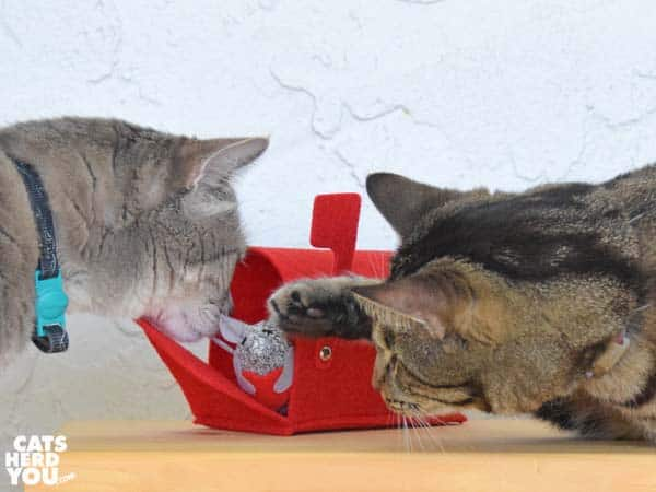 one-eyed brown tabby cat pokes gray tabby cat who is sniffing valentine mouse in mailbox