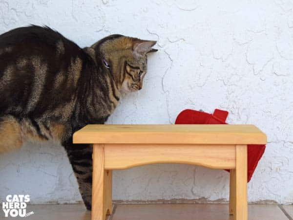 one-eyed brown tabby cat is alarmed by mailbox falling
