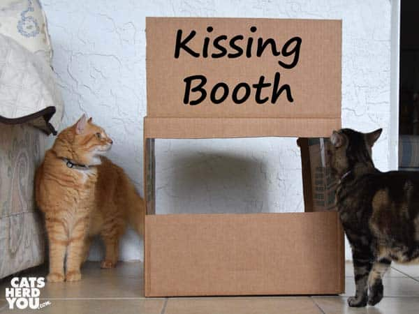 brown tabby cat and orange tabby cat look at kissing booth sign
