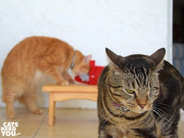 one-eyed brown tabby cat exits while orange tabby cat pushes Valentine mouse in mailbox in the background