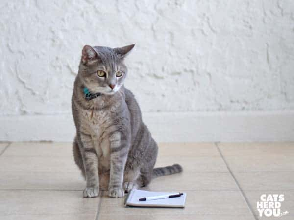 gray tabby cat with notebook