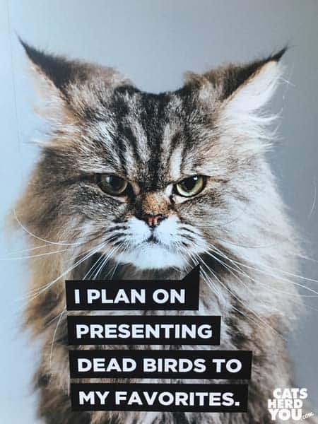 A cat from the vetty awards sign at NAVC