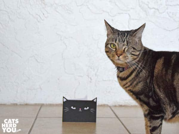 one-eyed brown tabby cat looks away from greeting card