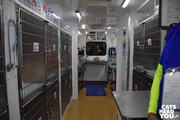 Lucy Pets mobile spay and neuter clinic