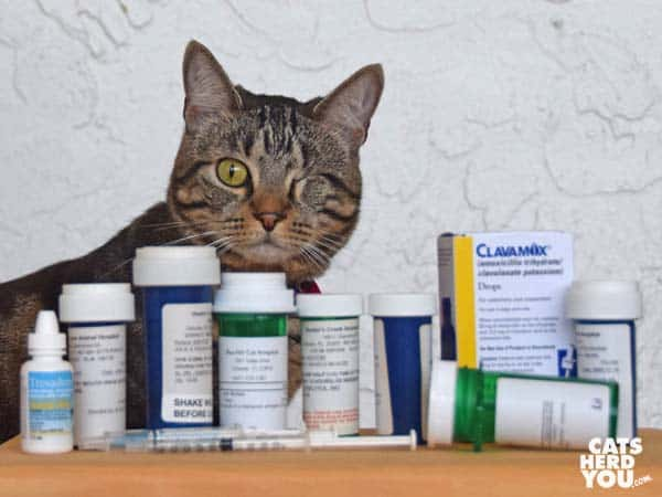 one-eyed brown tabby cat with pharmaceutical drugs