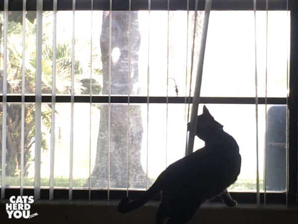 tabby cat chasing lizards in the window