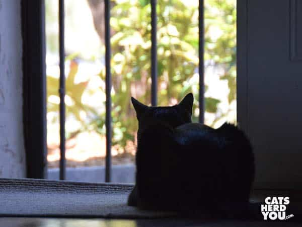 tabby cat looks out open door