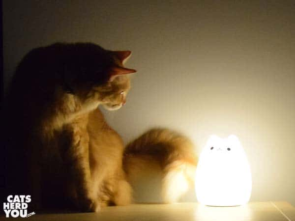 orange tabby cat looks at glowing cat-shaped object
