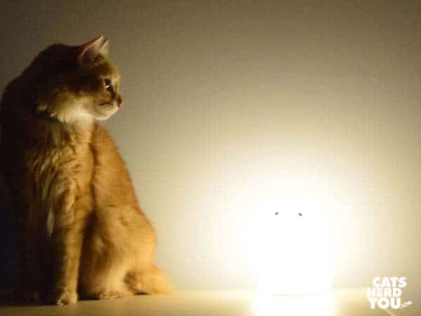 orange tabby cat sits next to glowing cat-shaped object