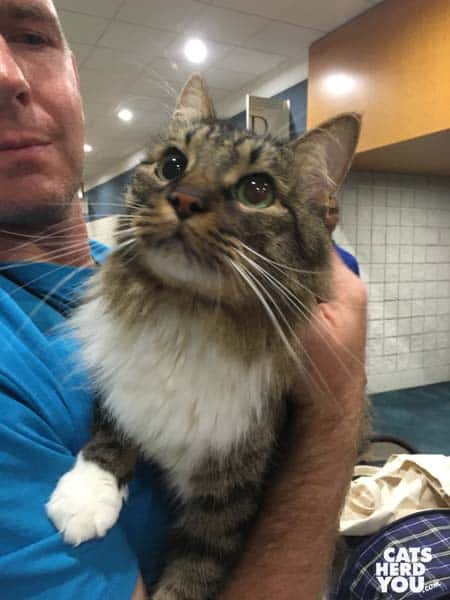 Maine Coon from Averting Catastrophe