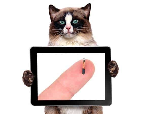 Cat holds tablet displaying microchip on finger