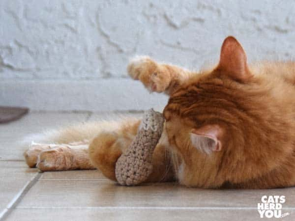 orange tabby cat plays with knit chicken leg toy