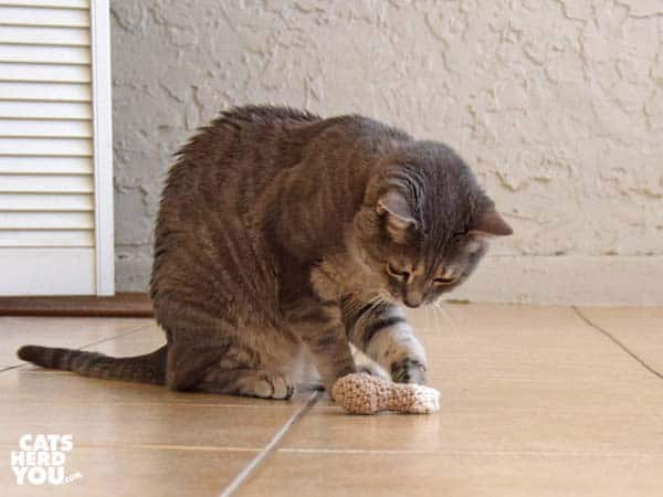 Gray tabby cat plays with knit chicken leg toy