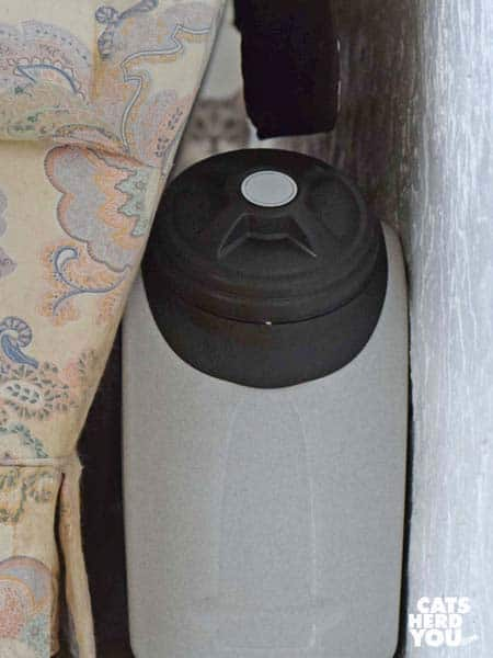 gray tabby cat peers over vittles vault behind sofa