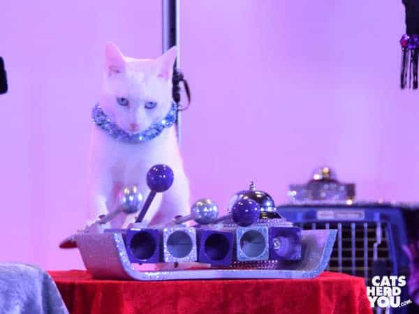 cat playing xylophone at Acro-Cats Orlando show