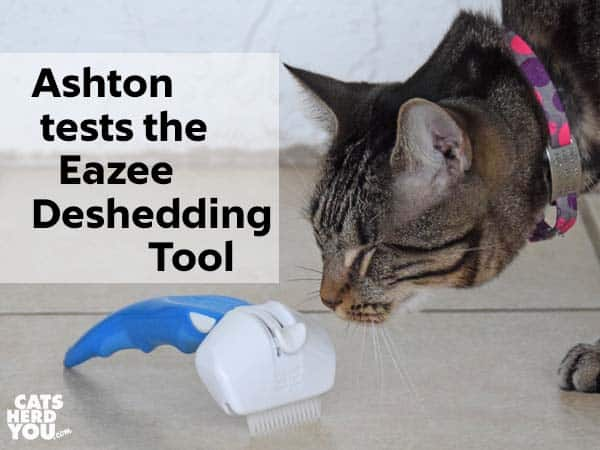 Ashton tests the Eazee deshedding tool