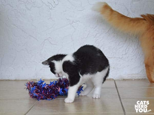 orange tabby cat exits frame as tuxedo kitten looks at red, white, and blue wreath
