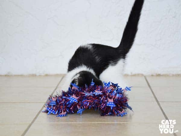 tuxedo kitten drops red, white, and blue wreath on floor