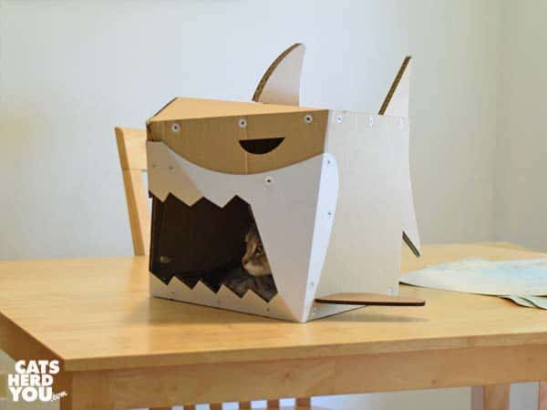 Cardboard shark on table
