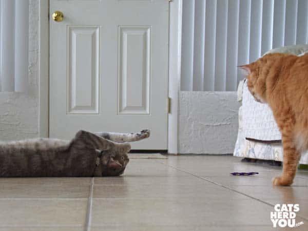 Orange tabby cat looks at gray tabby cat with catnip toy