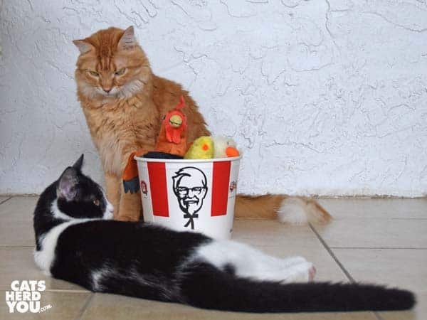 oranbe tabby cat looks at black and white tuxedo kitten beside stuffed animals in KFC bucket