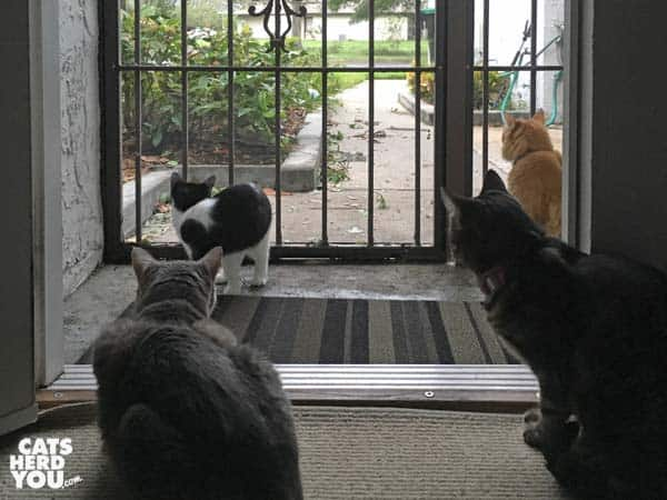 four cats cluster around open door