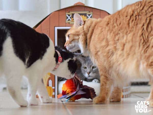 black and white tuxedo cat looks at turkey honeycomb centerpiece while orange and gray tabby cats look on