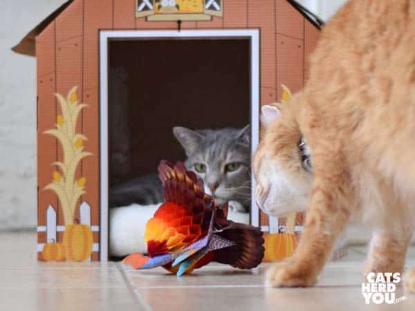 orange tabby cat looks at turkey honeycomb decoration