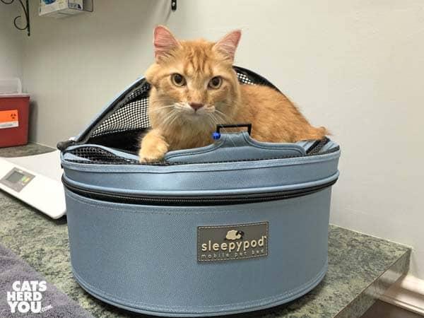 orange tabby cat in sleepypod carrier in veterinary exam room