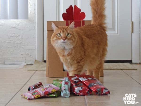 orange tabby cat next to pile of wrapped gifts
