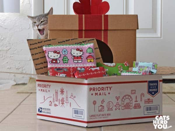 gray tabby cat near priority mail box full of wrapped gifts
