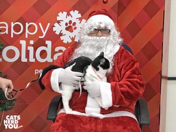 black and white tuxedo kitten meets santa claus