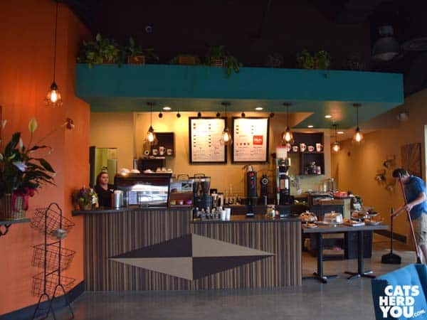 Axum Coffee interior at Orlando Cat Cafe