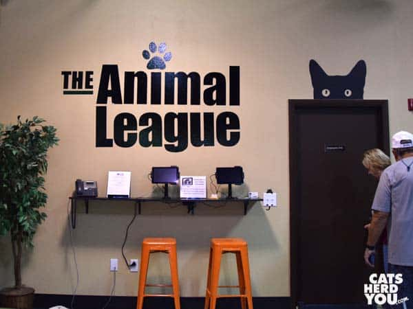 Orlando Cat Cafe interior