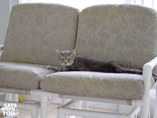 gray tabby cat on glider
