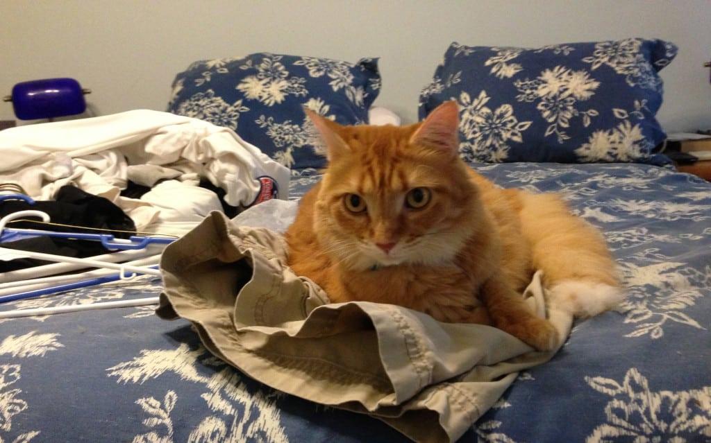 Newton on Laundry