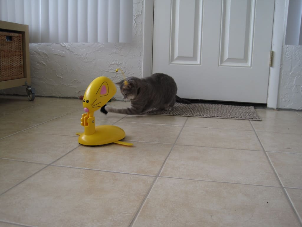 Panic Mouse-Pierre 6