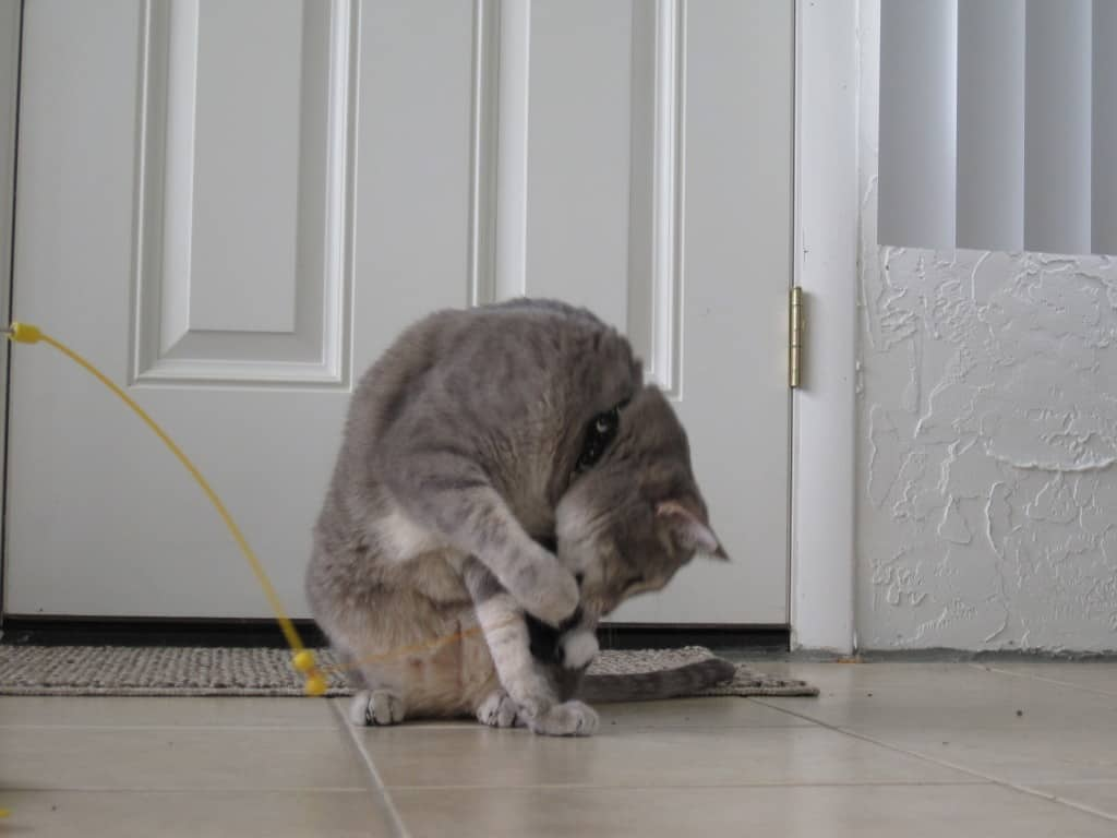Pierre-panic mouse bitey