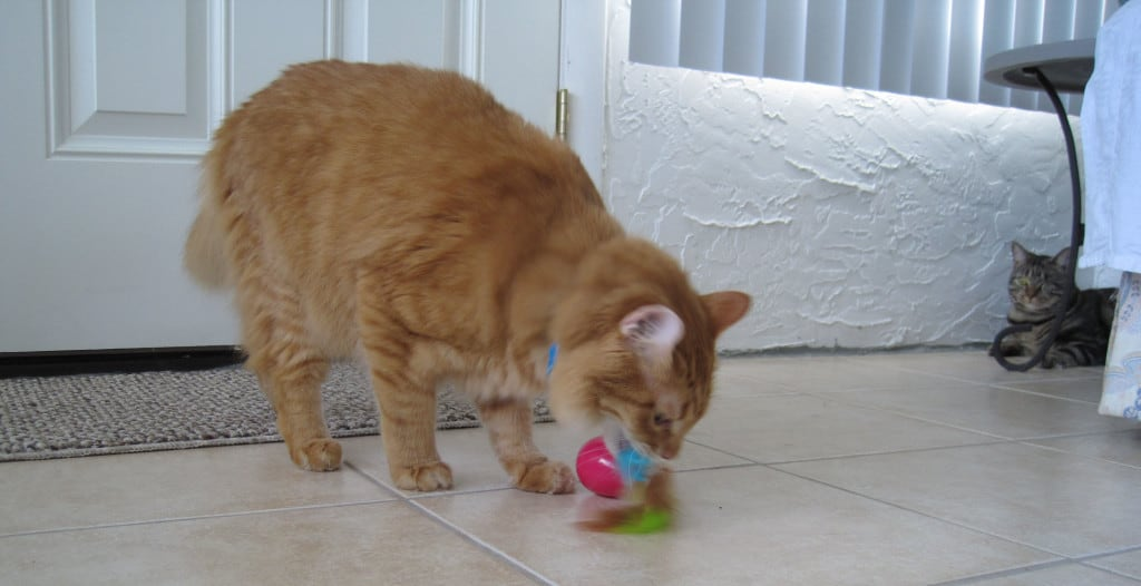 Newton with egg toy 03