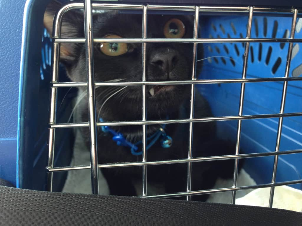 Beau on his way home 20131019