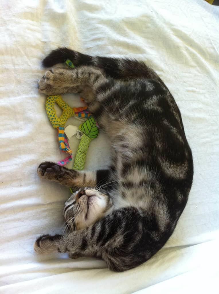 Kitten Ashton is Adorable sm
