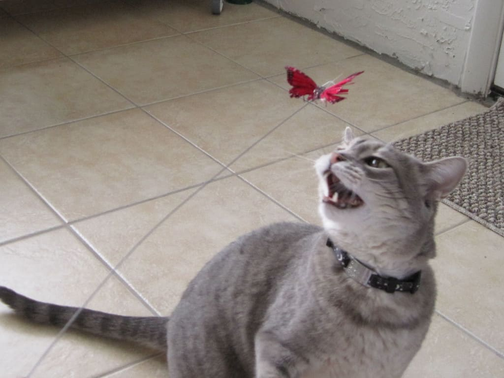 Pierre and Butterfly Toy