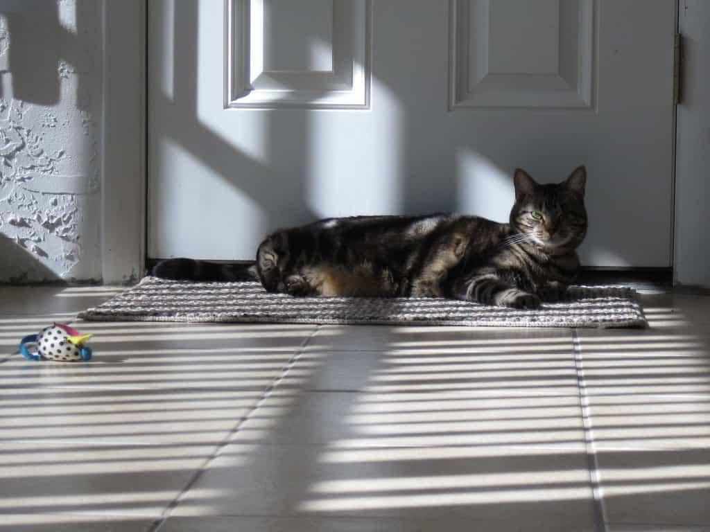 Ashton in sun 01