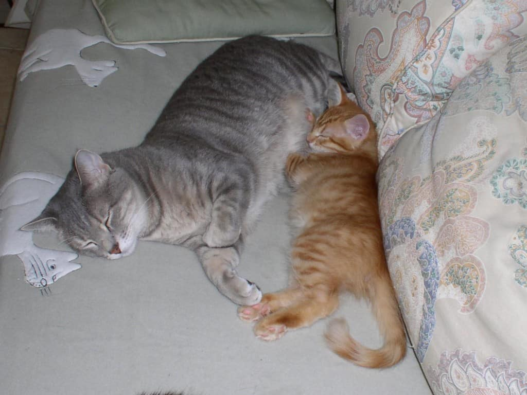 Newon and Pierre on sofa Sneaky Snuggle