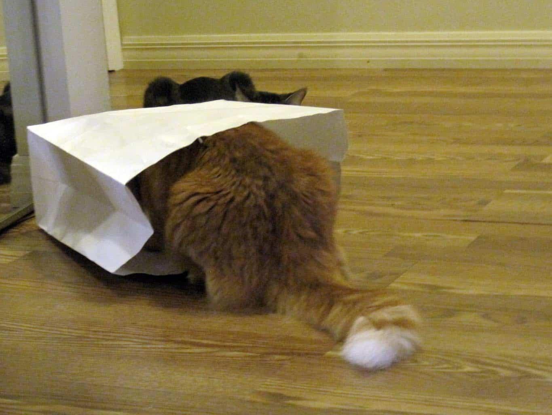 battle cats online