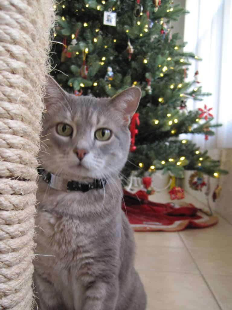 Pierre Cat Tree and Christmas Tree